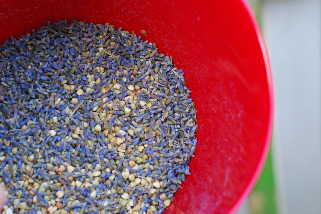 lavender-and-buckwheat