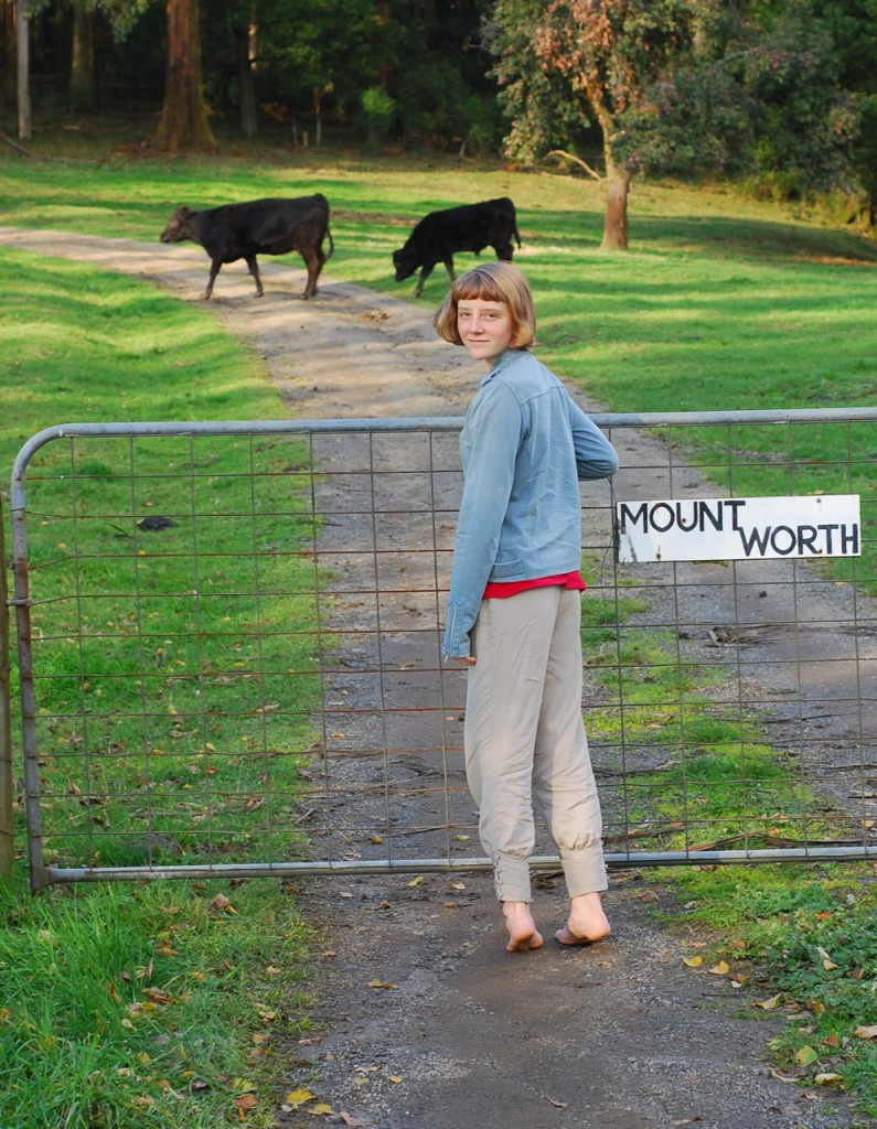 abby-found-some-cows