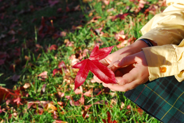 holding the leaf