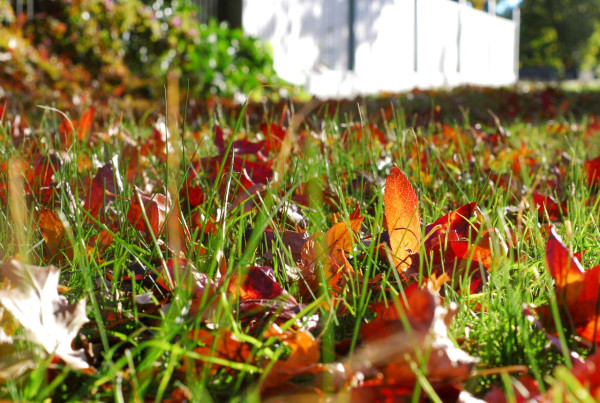 leaves in grass