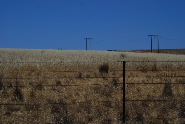 empty fields