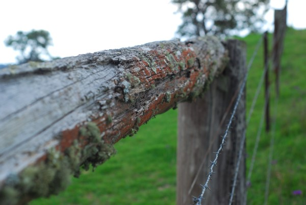 fence with lichen