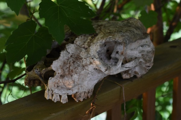skull and grapes