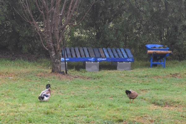 new duck goose house