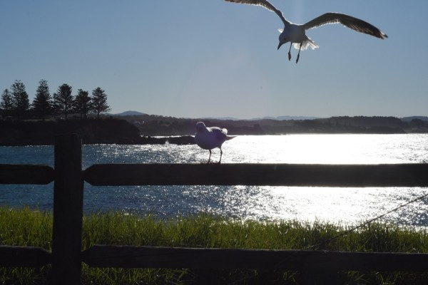 joined by the gulls